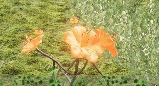 Butterflies Polllinating