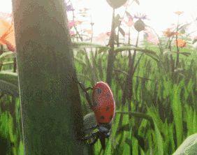 Ladybird climbing stalk GIF!